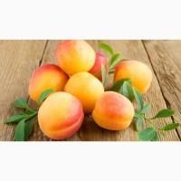 Купим абрикос