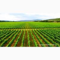 Виноградники, грушевые и яблочные сады, сельхоз земля в Севастополя