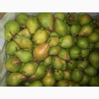 Продам грушу сорту Яблунівська
