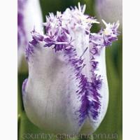 Продам луковицы Тюльпанов Бахромчатых и много других растений (опт от 1000 грн)