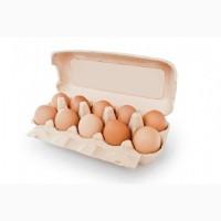 Яйца оптом разных категорий. Продтовары Днепр