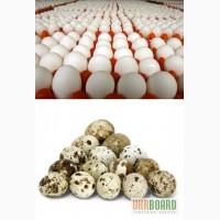 Яйца инкубационные куриные и перепелиные напрямую от ПРОИЗВОДИТЕЛЯ!
