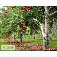 Потрібні різноробочі на збір яблук (Польща)
