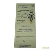 Плодные пчеломатки Бакфаст