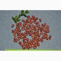 Арахис семена на посадку земляные орехи