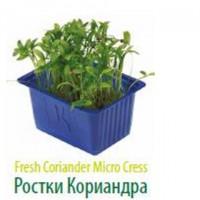 Продам микропобеги зелени