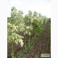 Сезонная распродажа растений от Садпроект