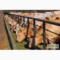 Оптовая продажа: коров, свиней, лошадей, кур, овец, страусов. Работаем по Украине. Одесса,