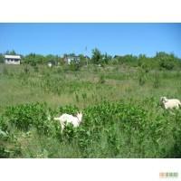 Продаю земля Гребени