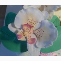 Сахарная орхидея фаленопсис