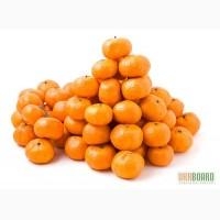 Продам мандарины оптом из Грузии СРОЧНО