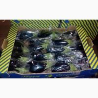 Продаем баклажан из Испании