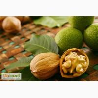 Предлагаем оптовые поставки ядра ореха грецкого кондитерским фабрикам