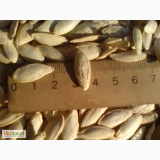 Семена тыквы дамский ноготь