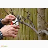 Обрезка деревьев плодового сада, ягодных культур и винограда