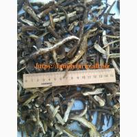 Бедренец (камнеломка) корень