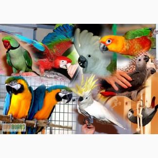 Продаём попугаев-выкормышей
