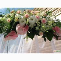 Свадебное оформление,прокат чехлов на стулья,драпировка тканью.