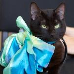 Роскошная метиска бомбейской кошки