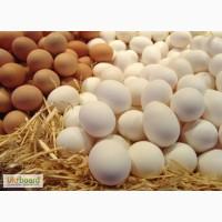 Продам куриное яйцо оптом С-0 11 грн,С-1 9,20 грн.