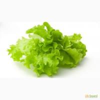 Разнорабочий на предприятие по продукции салатов в Польшу