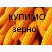 Компанія дорого купить кукурудзу