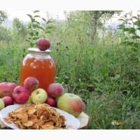 Уксус яблочный домашний с горного сада Карпат