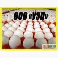 Яйцо купить. Яйцо оптом. Куриные яйца оптом. Доставка бесплатно. От производителя