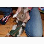 Прогулочный костюм памперс для кроликов