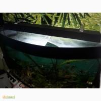 Продам аквариум, фильтр, обогреватель, освещение и т.д