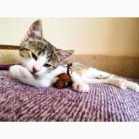 БЕСПЛАТНО в заботливые и ответственные руки котенка 2, 5 мес (девочка)