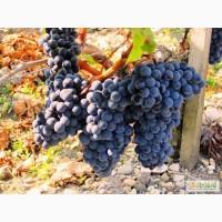 Изысканное красное сухое ЭКО-вино МЕРЛО