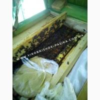 Канди для пчел.Паста канди для пчел. Від виробника