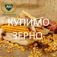 На постійній основі закуповуємо кукурудзу