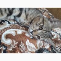 Подарю милых коточков