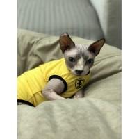 Продам одежду для сфинкса, котов, кошек