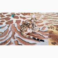 Продажа бенгальских котов из питомника Украина