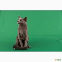 Продаю котят породы русская голубая