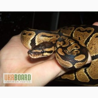 Все змеи собственного разведения