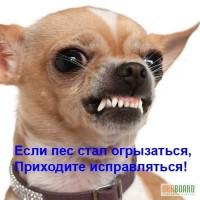 Консультации зоопсихолога - коррекция проблемного поведения собак.