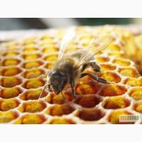 Продам пчелиные семьи, отводки и пчелопродукты