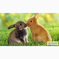 Поставки оптом ветеринарных препаратов для домашних и с/х животных