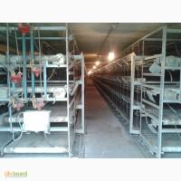 Оборудование для птицеводства, оборудование для птицефабрик