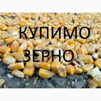 Закуповуємо кукурудзу фуражну великий об'єм