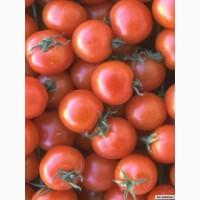 Купить крупным оптом помидор