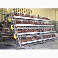 Клетки для кур несушек купить /оборудование для птицефабрики из китая