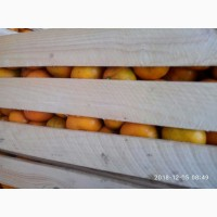 Продам Грузинские мандарины