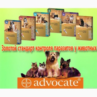 Купить Hills i/d сухой корм для кошек в СПб | Интернет