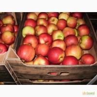 Продам яблоки оптом по низкой цене