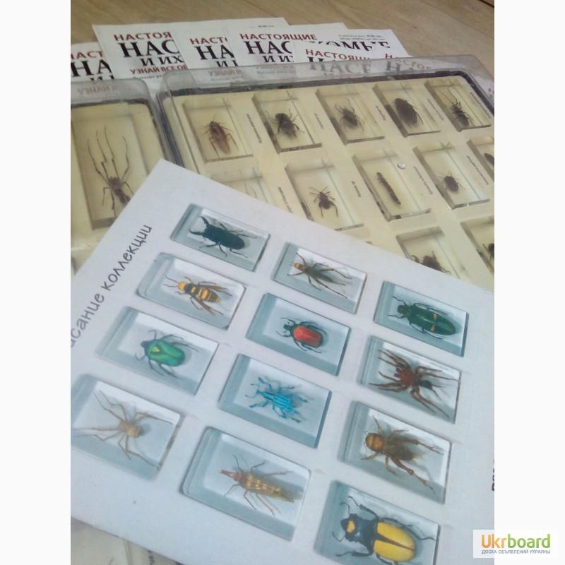 купить всю коллекцию насекомые и их знакомые